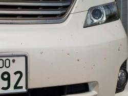 夜間の高速道路を走行してフロント部分が虫の死骸だらけに汚れしまったトヨタの大型ミニバン・ヴェルファイア/ホディカラー:ホワイト